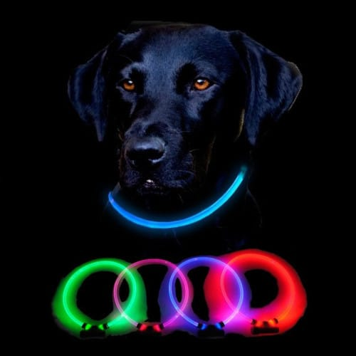 Dingo Lumitube Light Up Dog Collar