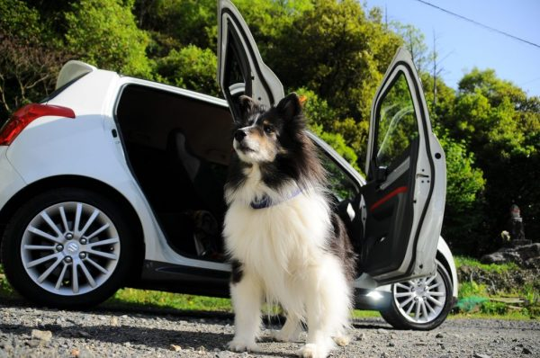 car and a dog