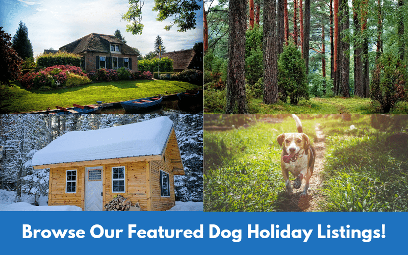 Browse Our Featured Dog Holiday Listings!