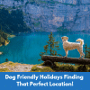 Dog Friendly Holidays Finding That Perfect Location!