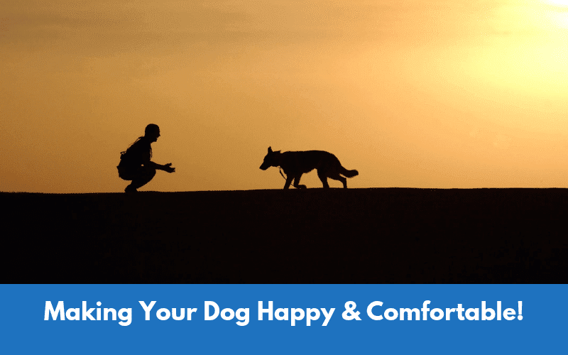 Making Your Dog Happy & Comfortable!