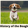 a dog beagle dog with a stick in his mouth