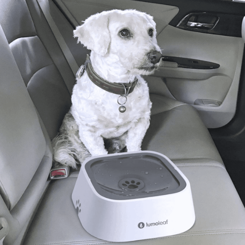 A dog in a car with the spill proof water bowl