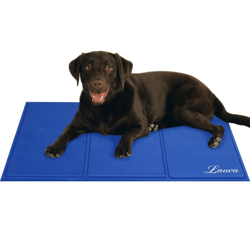 A dog sitting on a blue cooling mat
