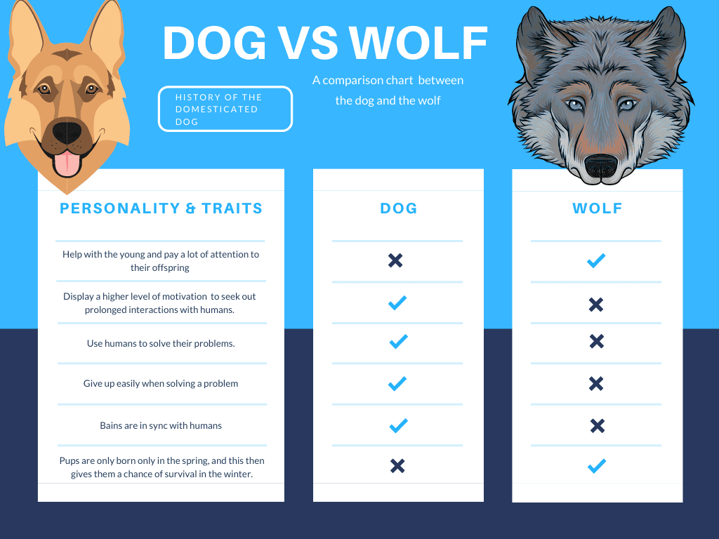 A personality comparison chart between the dog and the wolf personality