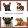 four dogs and a quote HAPPINESS IS HAVING A DOG