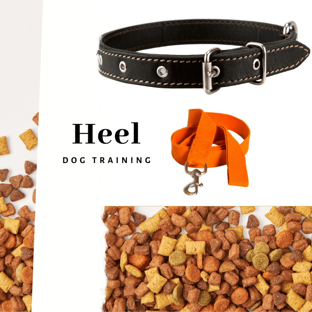 Dog lead, collar and treats