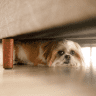 dog hiding under chair