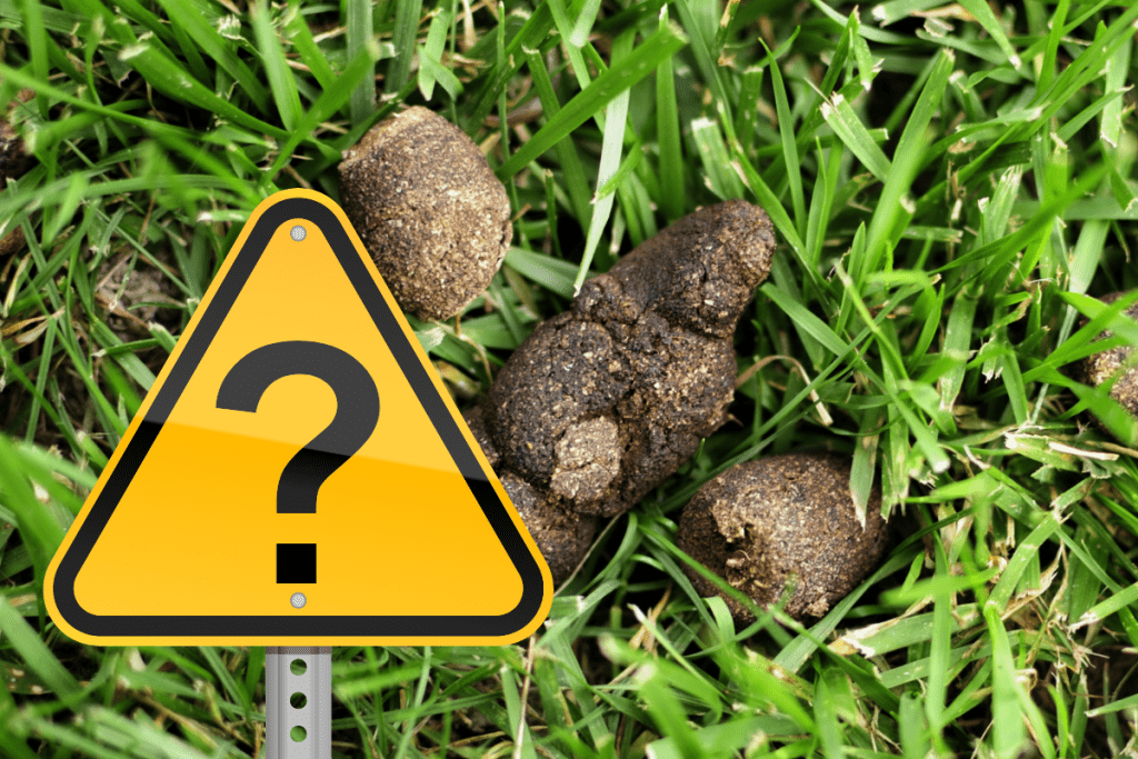 dog poo and a question mark