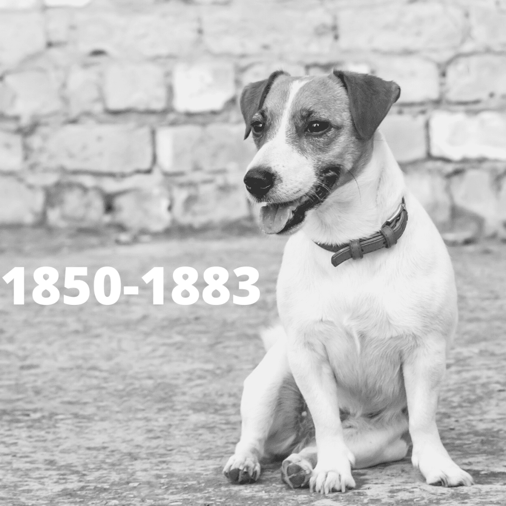 Jack Russell Terrier dog - 1850-1883