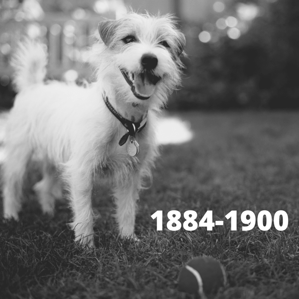 Jack Russell Terrier dog - 1884-1900
