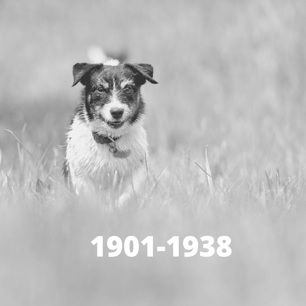 Jack Russell Terrier dog - 1901-1938