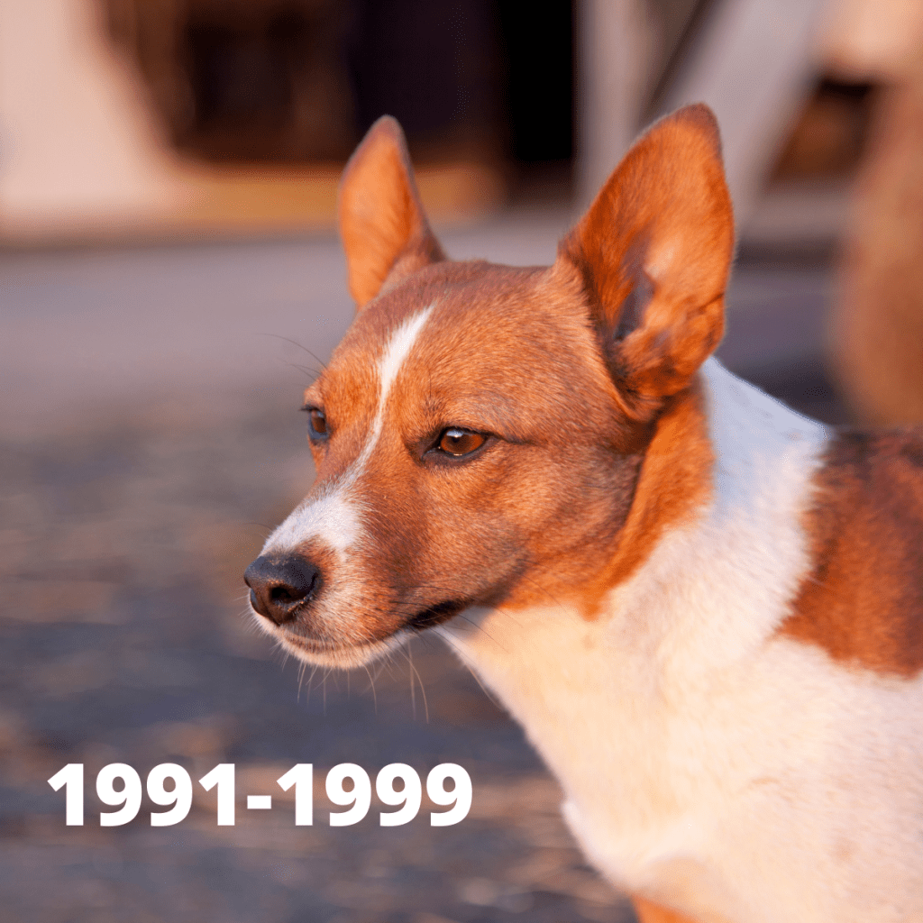 Jack Russell Terrier dog - 1991-1999