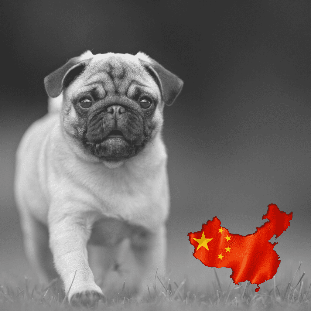 A pug with a China flag on it