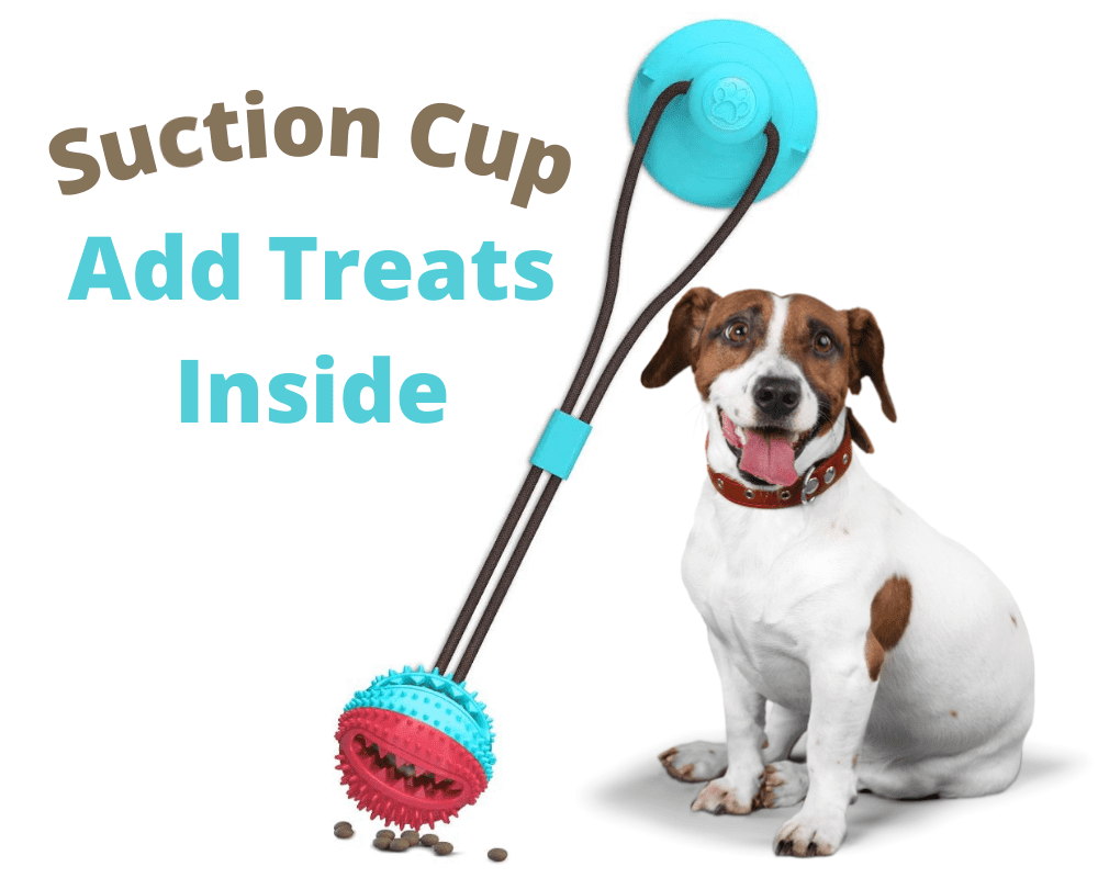 Suction Treat Cup and Jack Russell dog sitting down