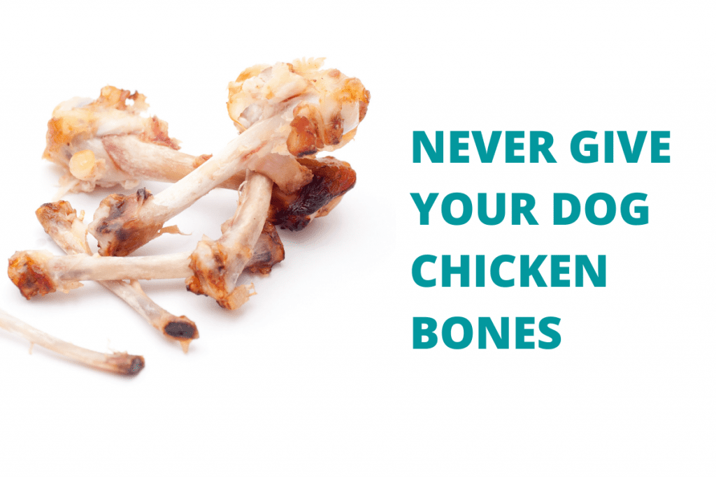 Chicken bones and a message saying never give your dog chicken bones