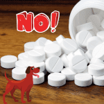 Paracetamol, dog, text - NO