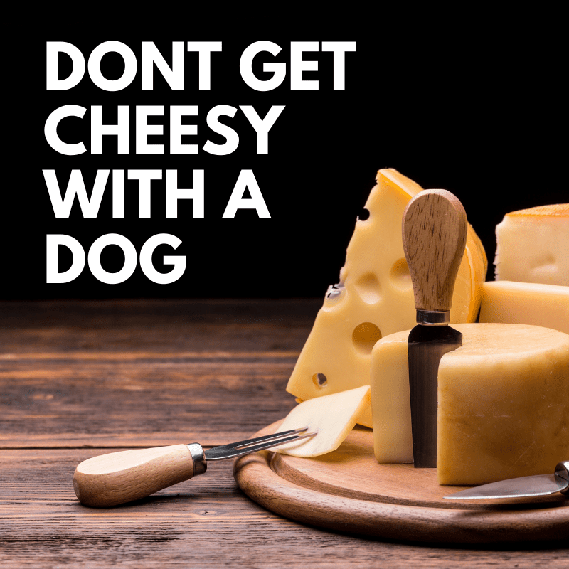 Cheese and text saying - DONT GET CHEESY WITH A DOG
