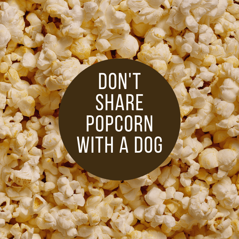 Popcorn and text saying don't share popcorn with a dog