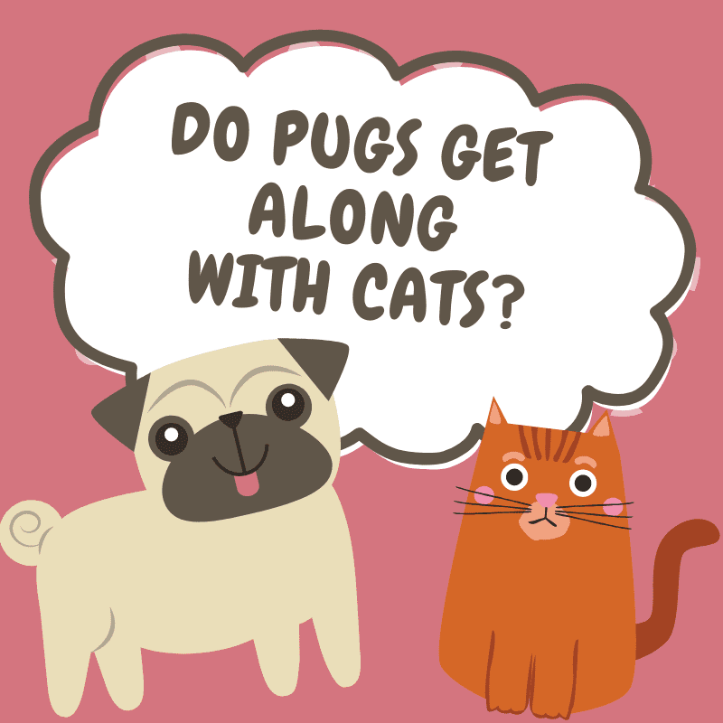 cartoon pug and cartoon cats with text - Do Pugs get along with cats