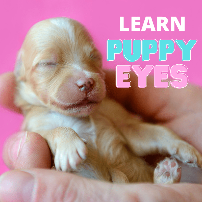 A puppy with closed eyes and text saying LEARN Puppy Eyes