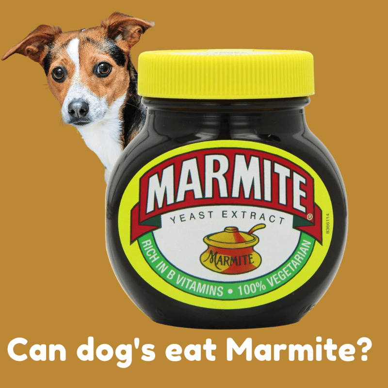 Tub of marmite and a dog looking from behind it