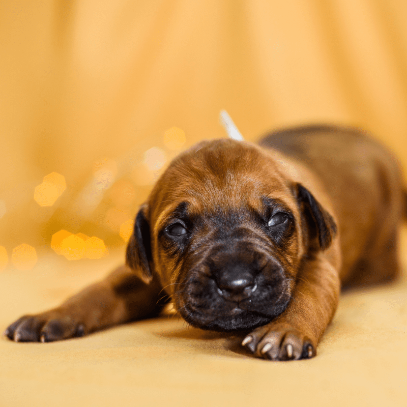 A puppy that has just opened his eyes