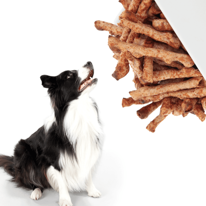 Twiglets in a bowl and a dog looking up at them