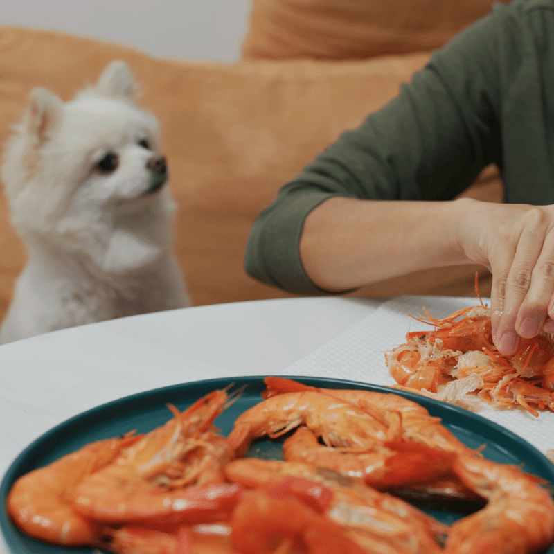 Woman eating prawns with her dog.