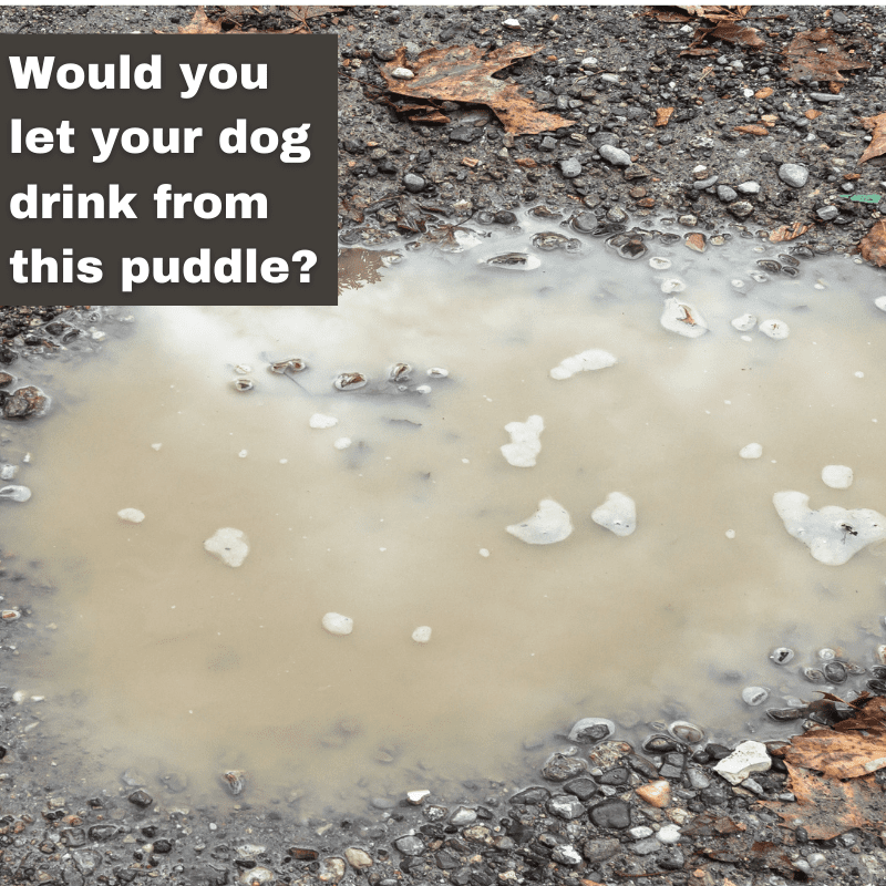 A dirty muddy puddle