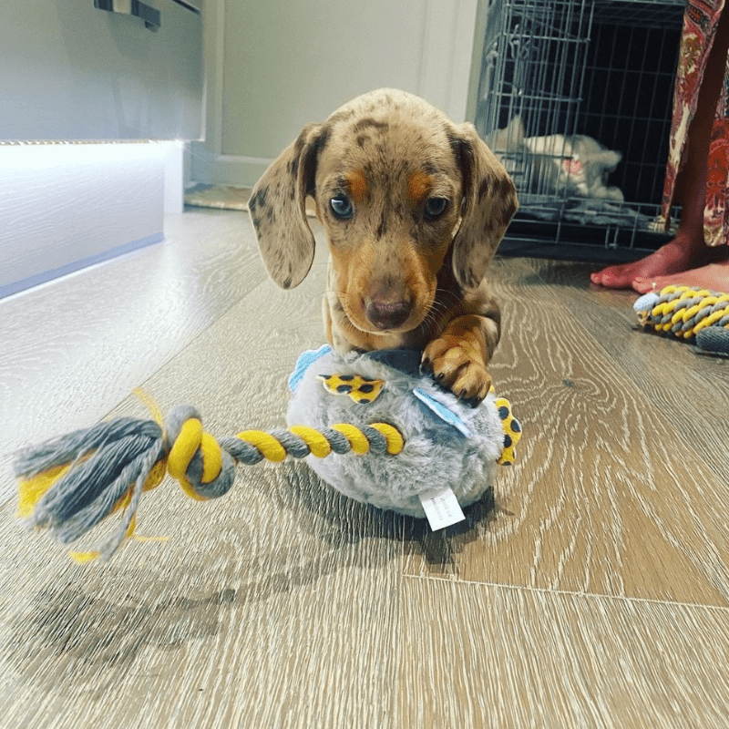 A puppy with toy, cage in background with heartbeat toy