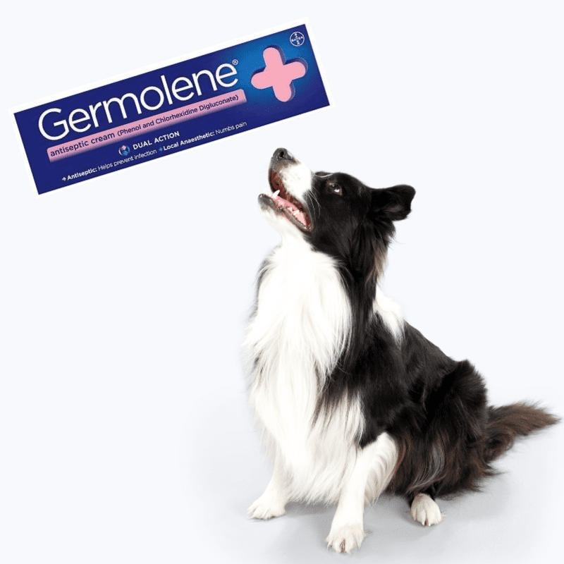 A tube of Germolene and a black and white dog