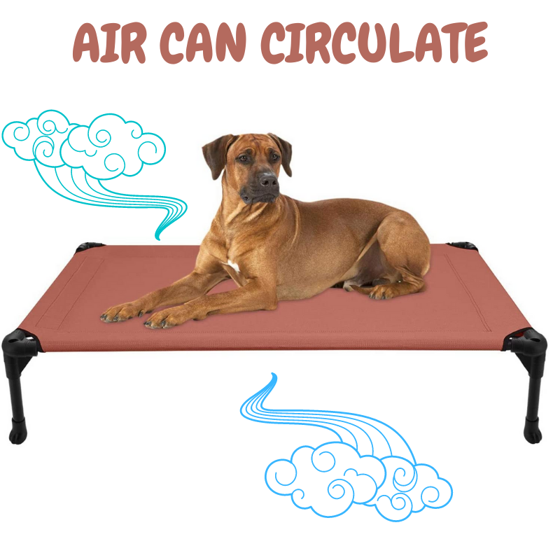 Raised dog bed, and a dog laying down - Text AIR CAN CIRCULATE