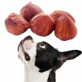 five hazelnuts and a black and white dog looking up at them
