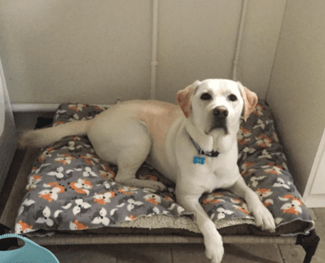 raised dog bed with dog on it