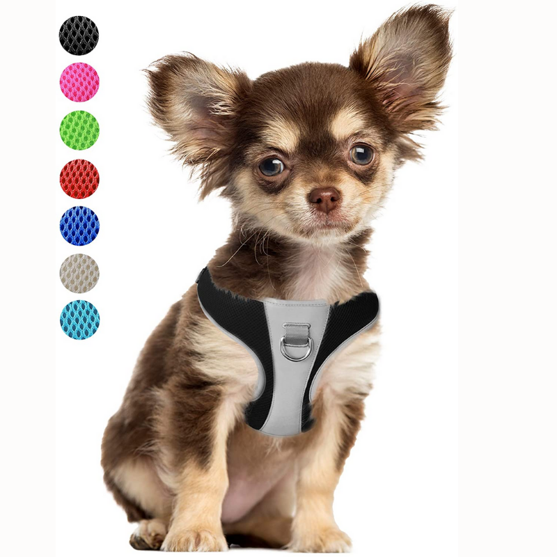Comfy well fitted Chihuahua Harness