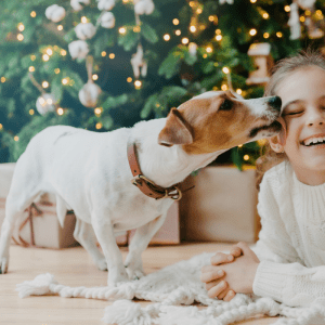 a cute JRT dog licking a child's face