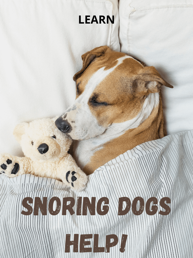 a dog in bed with text - SNORING DOGS HELP!