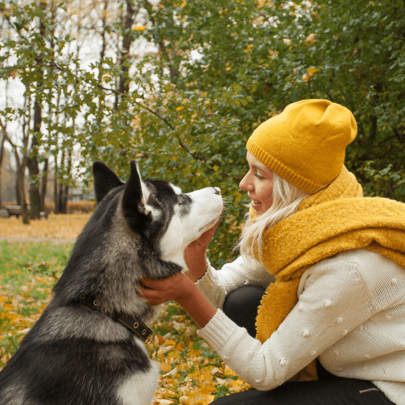 Woman training dog husky in the park