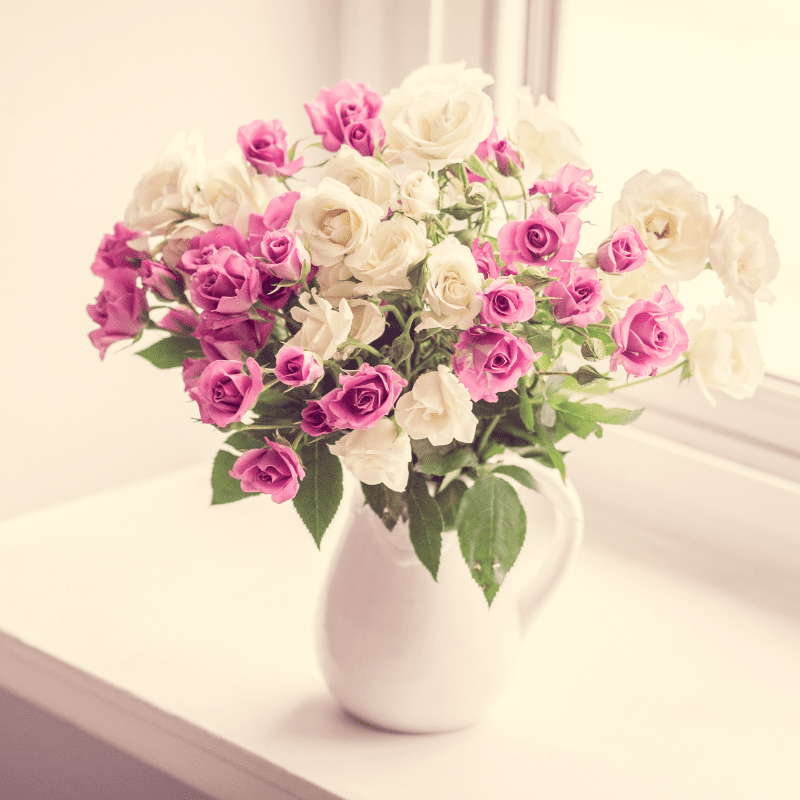 Pink and white roses, in a vase on the window ledge