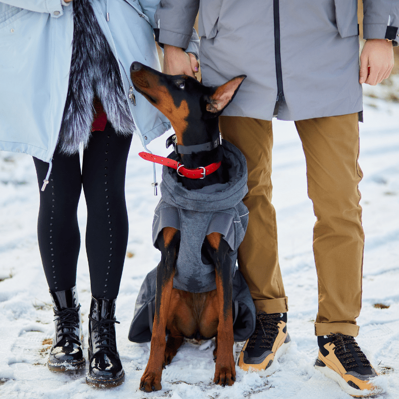 Unrecognizable young couple with their Dobermann. The Dobermann has a snow jacket on and a red collar.