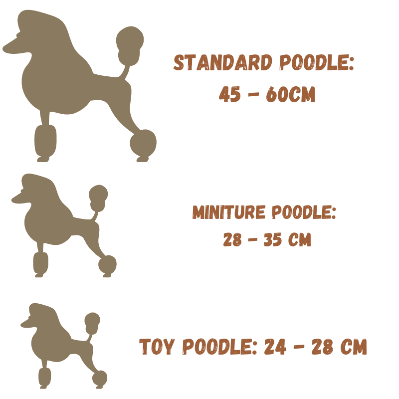 Three Poodle silhouettes and correct sizes next to them