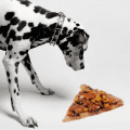Dalmatian dog looking at a slice of pizza on the floor