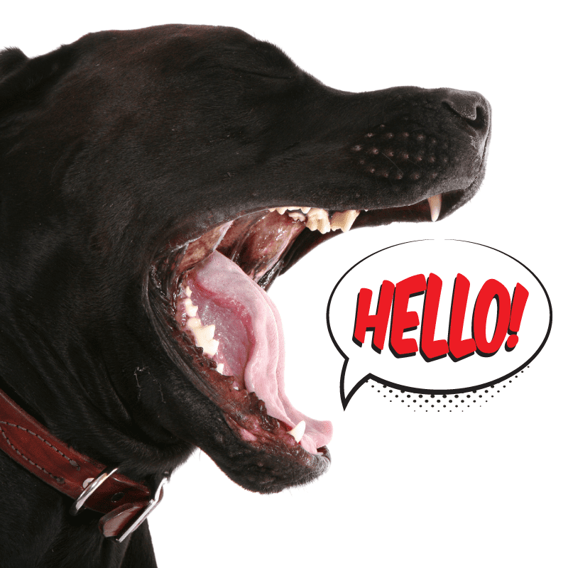 Dog with mouth open, with a speech bubble that reads Helllo