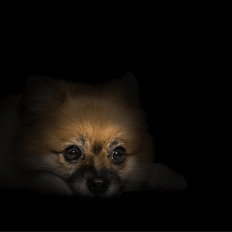 A small dog sitting in darkness showing his head
