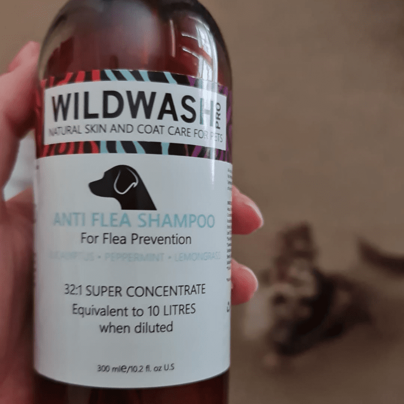 Holding a bottle of dog wash, with a dog looking up