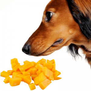 mango cubes and a dog looking at them